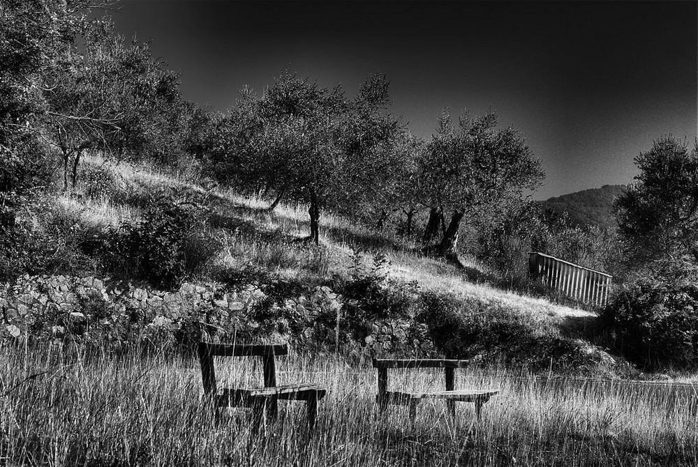 Paesaggio estivo in campagna