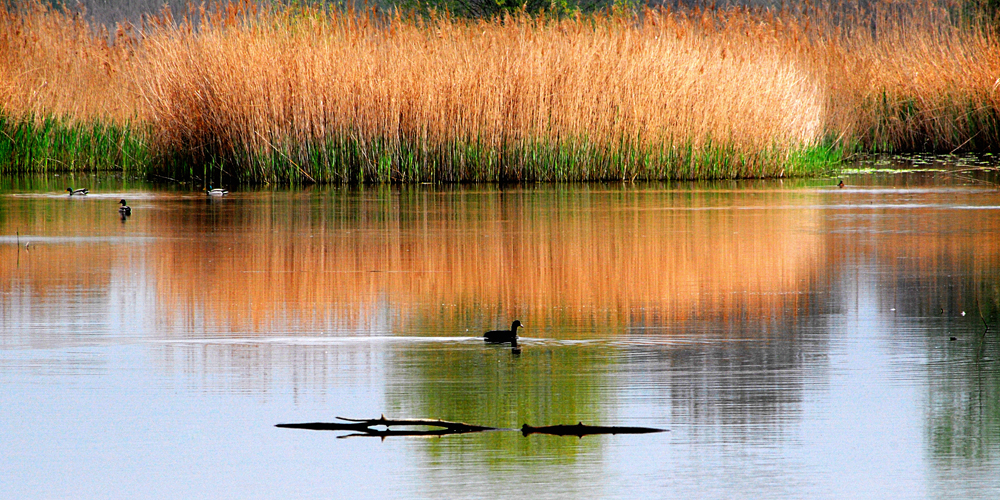 Paesaggio lacustre foto immagini paesaggi laghi e for Foto di zig e sharko