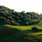 Paesaggio Leonfortese.