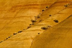 painted hills - detail