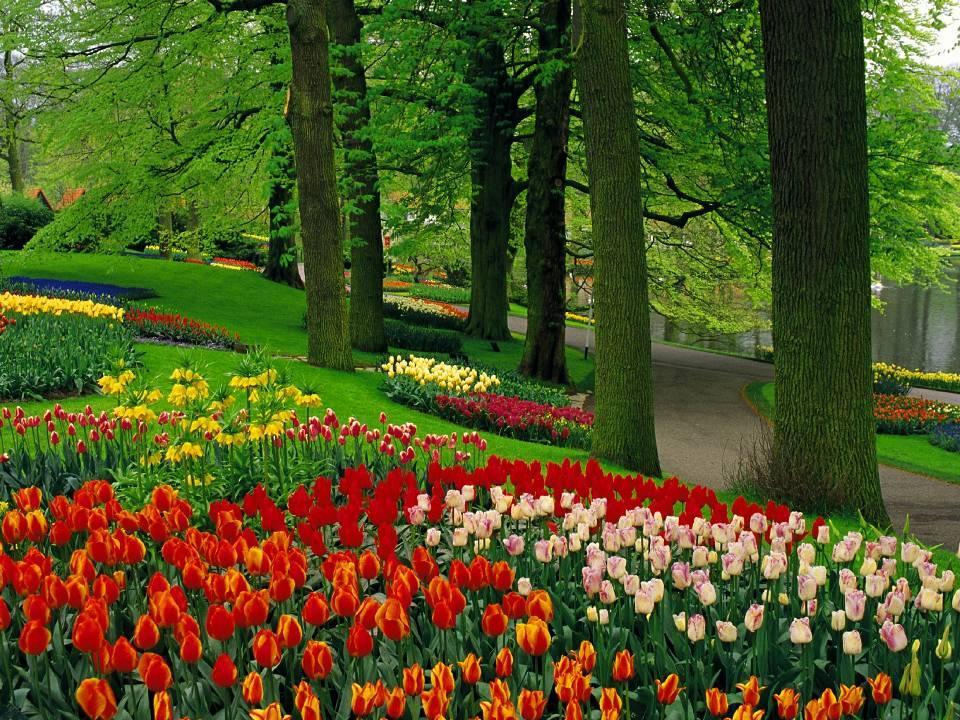 Paisaje rodeado de tulipanes