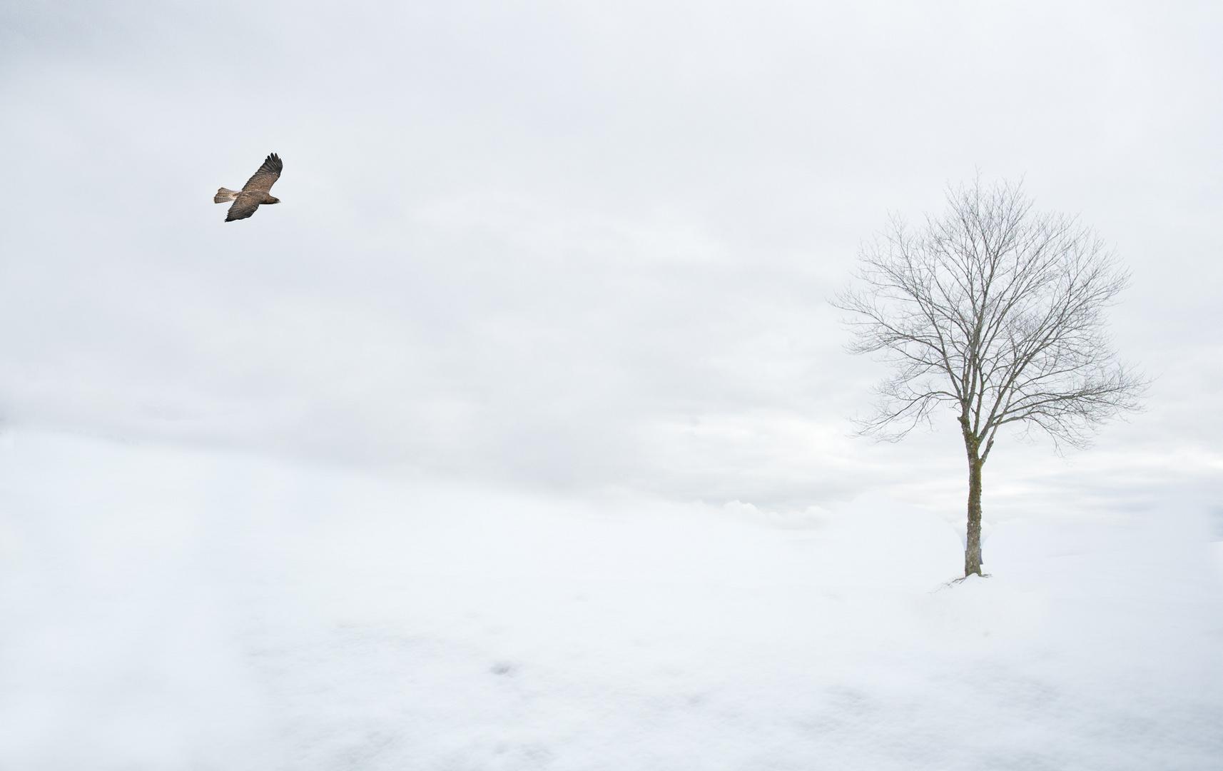 Pájaro, árbol y nieve