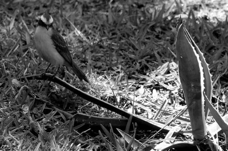 Pájaro y agave