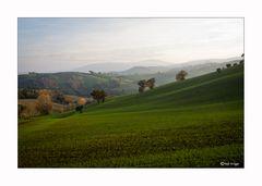 Palazzata  (Marche)