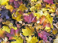 Palette des Herbstes