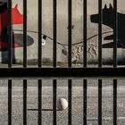 Palla prigioniera