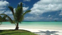 Palm at Cote D'Or