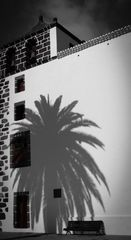 Palm In Shadow!