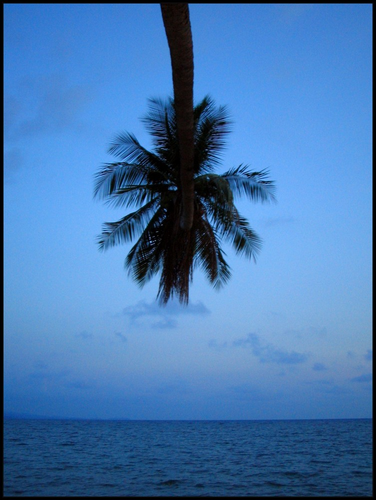 palm over the ocean