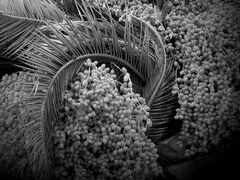 Palm Tree Inards 1
