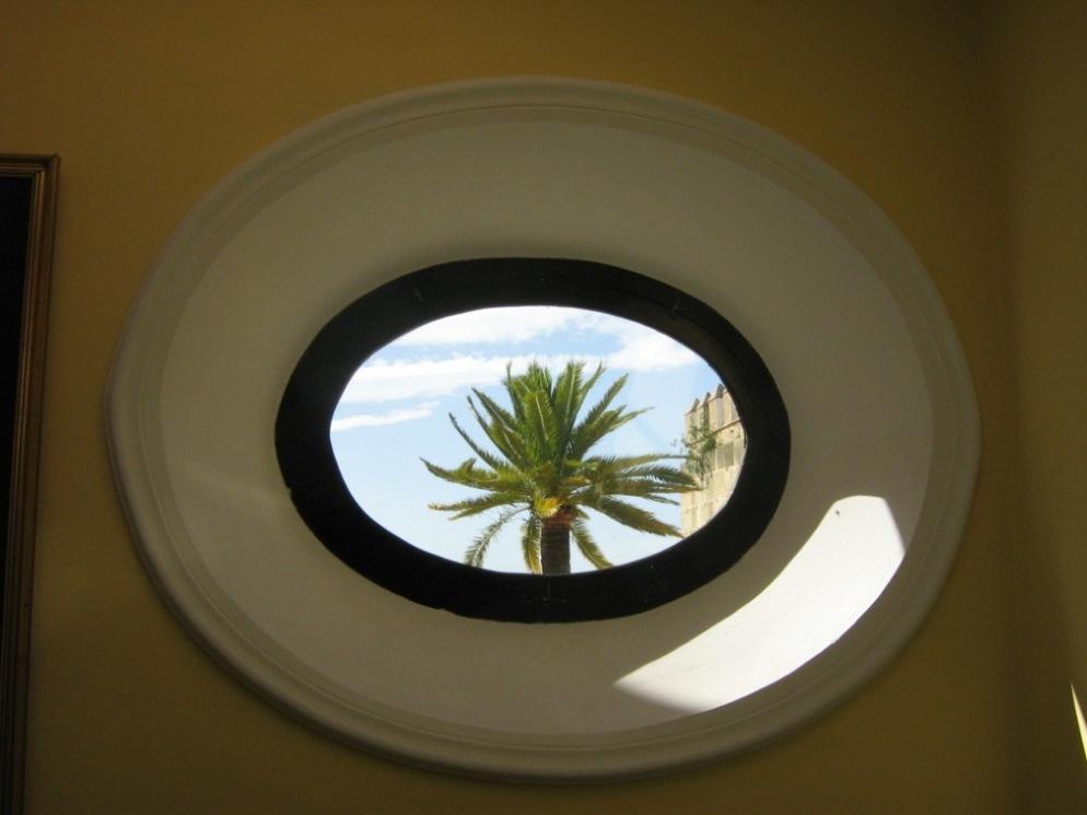 Palm Tree Through Round Window