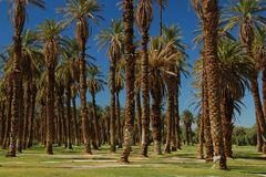 Palm Trees - Furnace Creek Ranch - Original