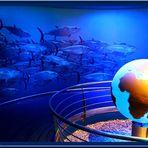 Palma-Aquarium  (mit Gedicht)
