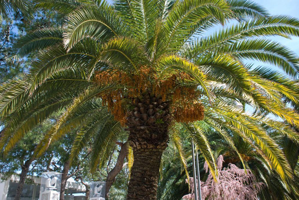 Palma di San Benedetto del Tronto