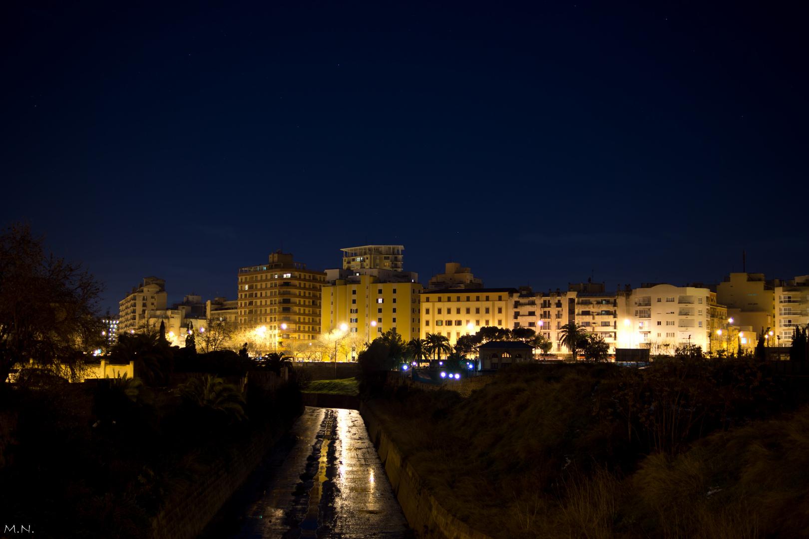 Palma nocturna.