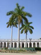 Palma Real Cienfuegos