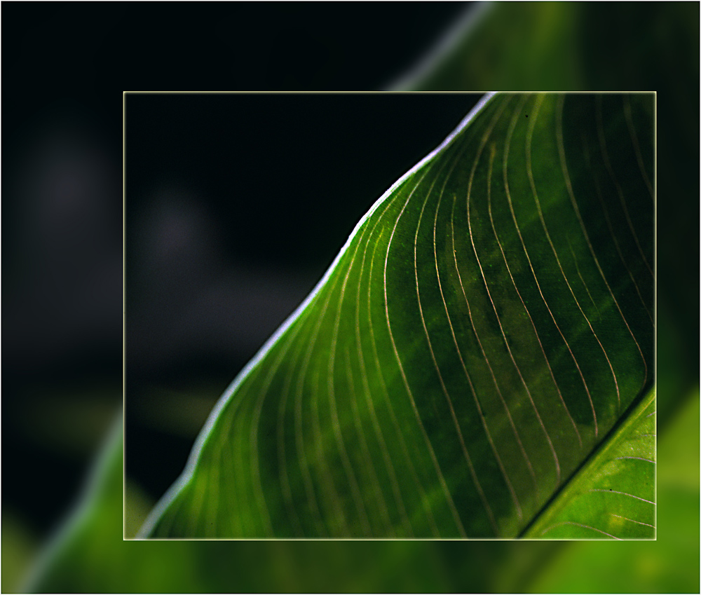 Palmblatt-kreativ