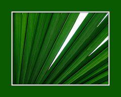 Palmblatt mit Durchblick