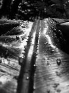 Palmblatt mit Wasserperlen