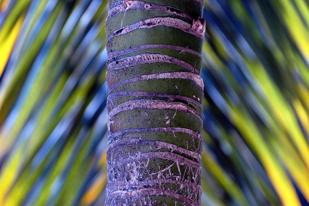 palmblattsymphonie