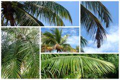 Palmcollage