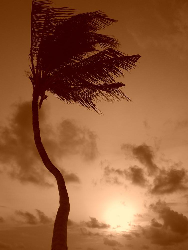 Palme im Wind / Malediven