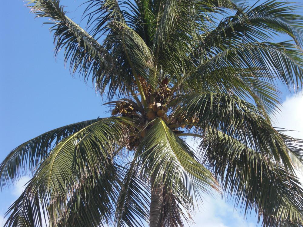 Palme in Miami