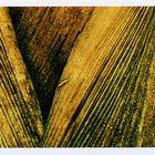 Palme in velvia-grün