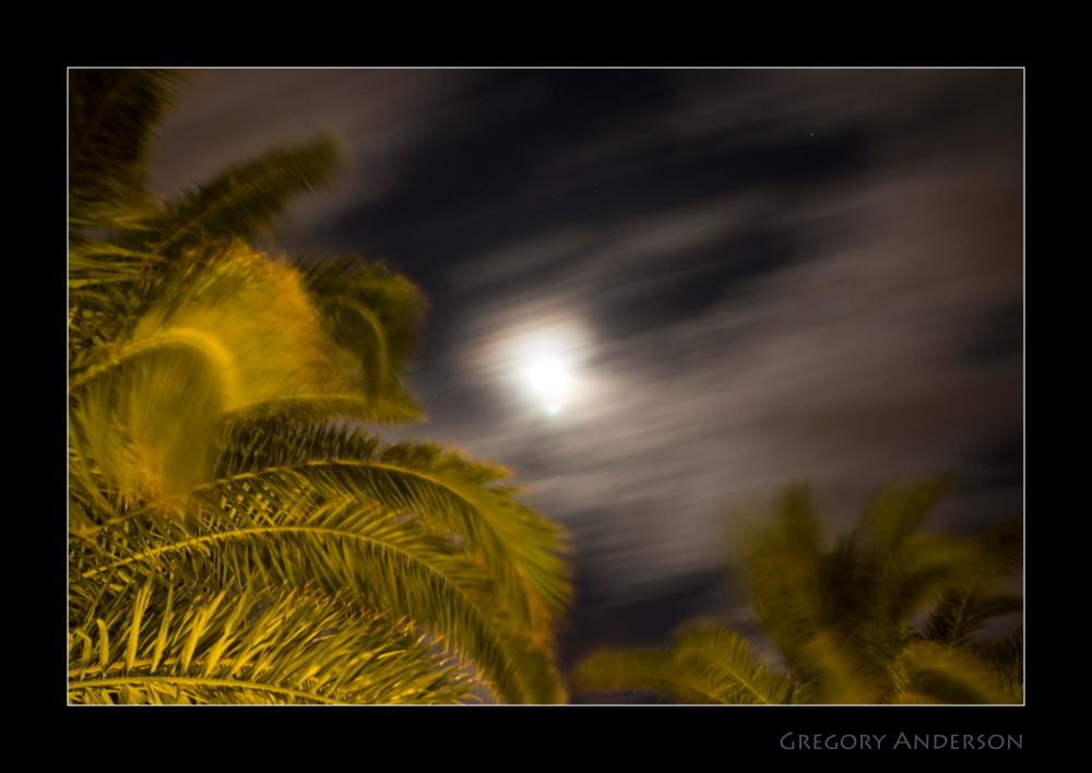 Palme Mond und Sterne