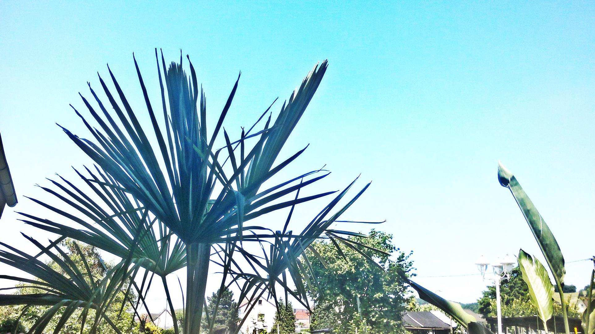 Palme und Himmel