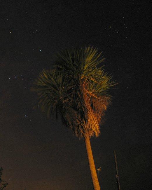 Palme unter sternklarem Himmel