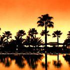 Palmen am Pool