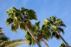 Palmen auf Gran Canaria