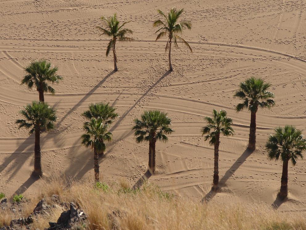 Palmen auf Teneriffa