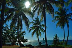 Palmen-hinter-Beach