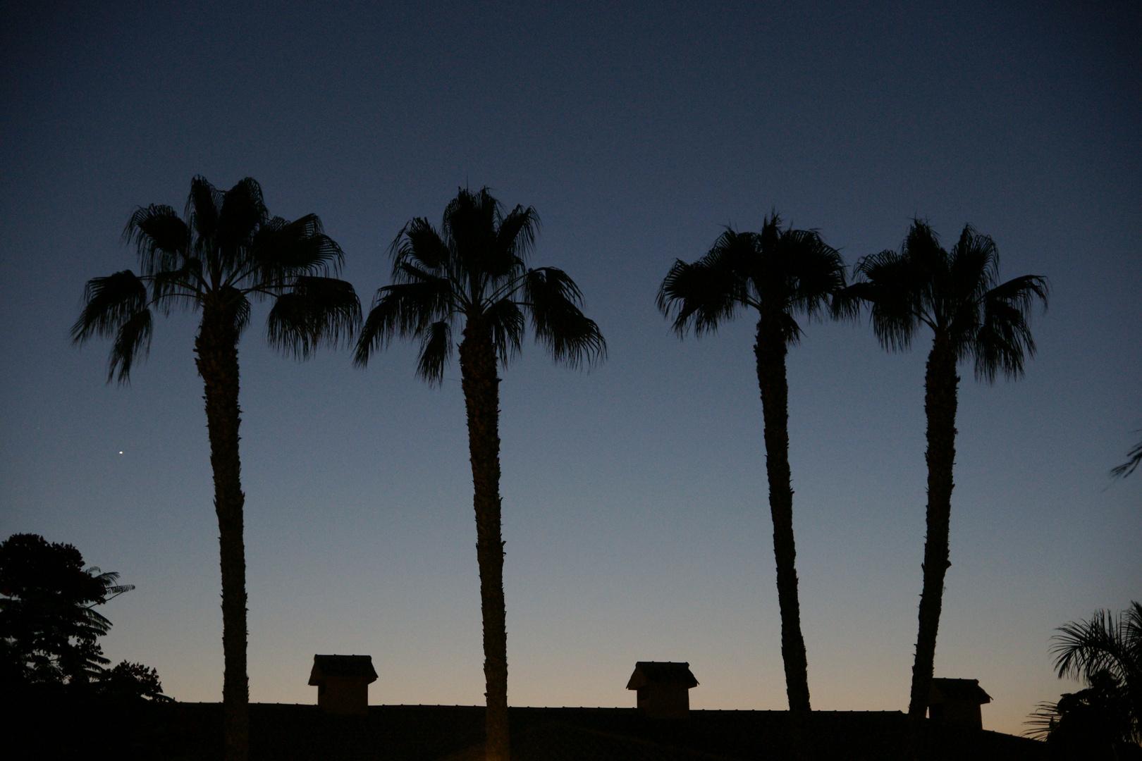 Palmen im Dunas Maspalomas