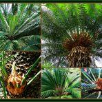 Palmen im Tropengewächshaus