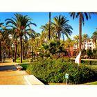 Palmen in Palma