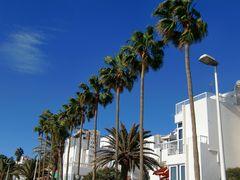 Palmen in Reih und Glied auf Gran Canaria