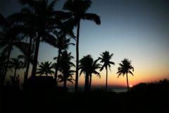 Palmen & Meer