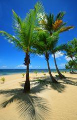 Palmen-mit-Schatten