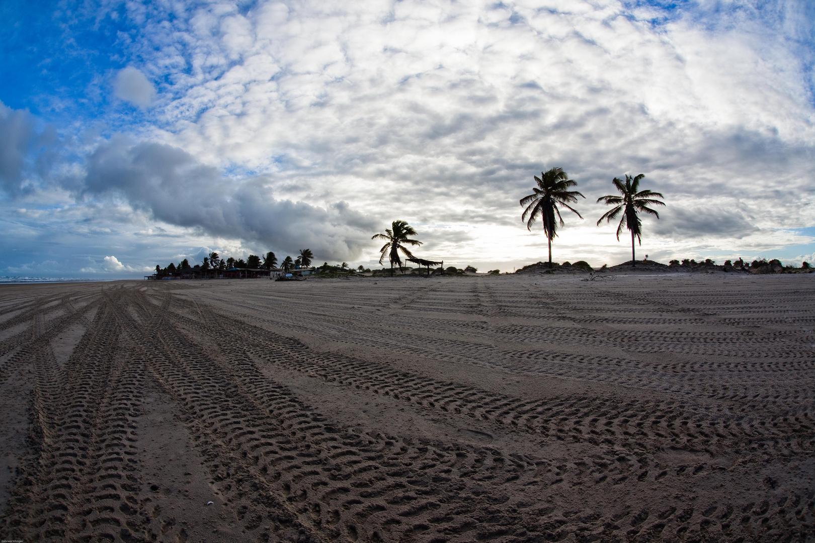 Palmen und Sandspuren