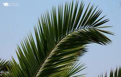 Palmenast