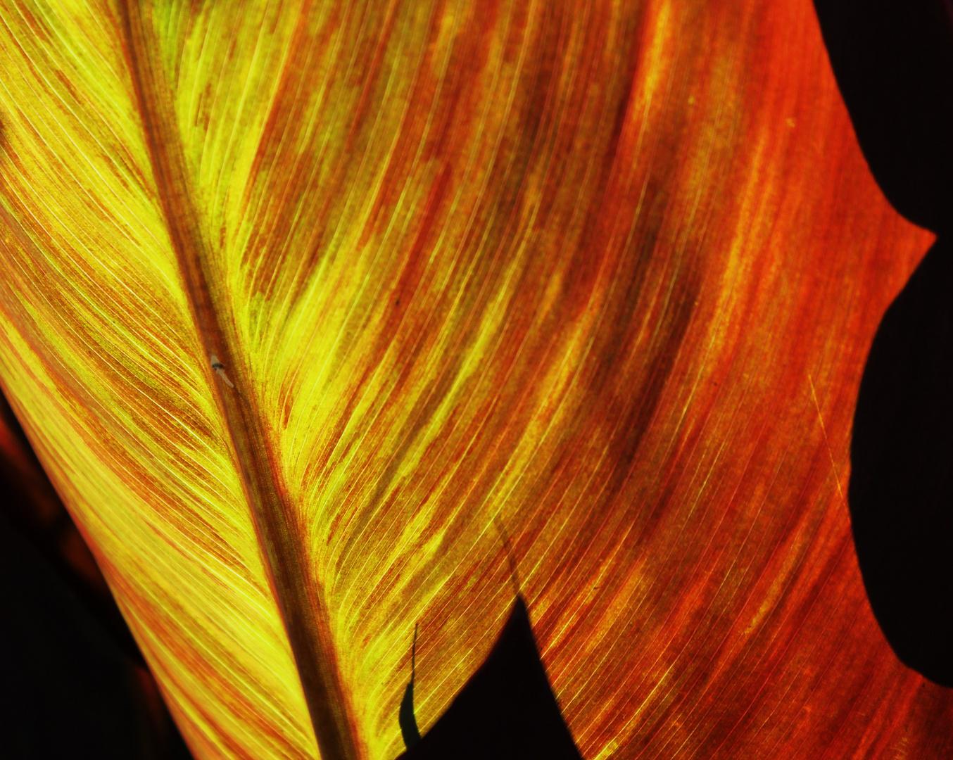 Palmenblatter Foto Bild Spezial Outdoor Licht Bilder Auf