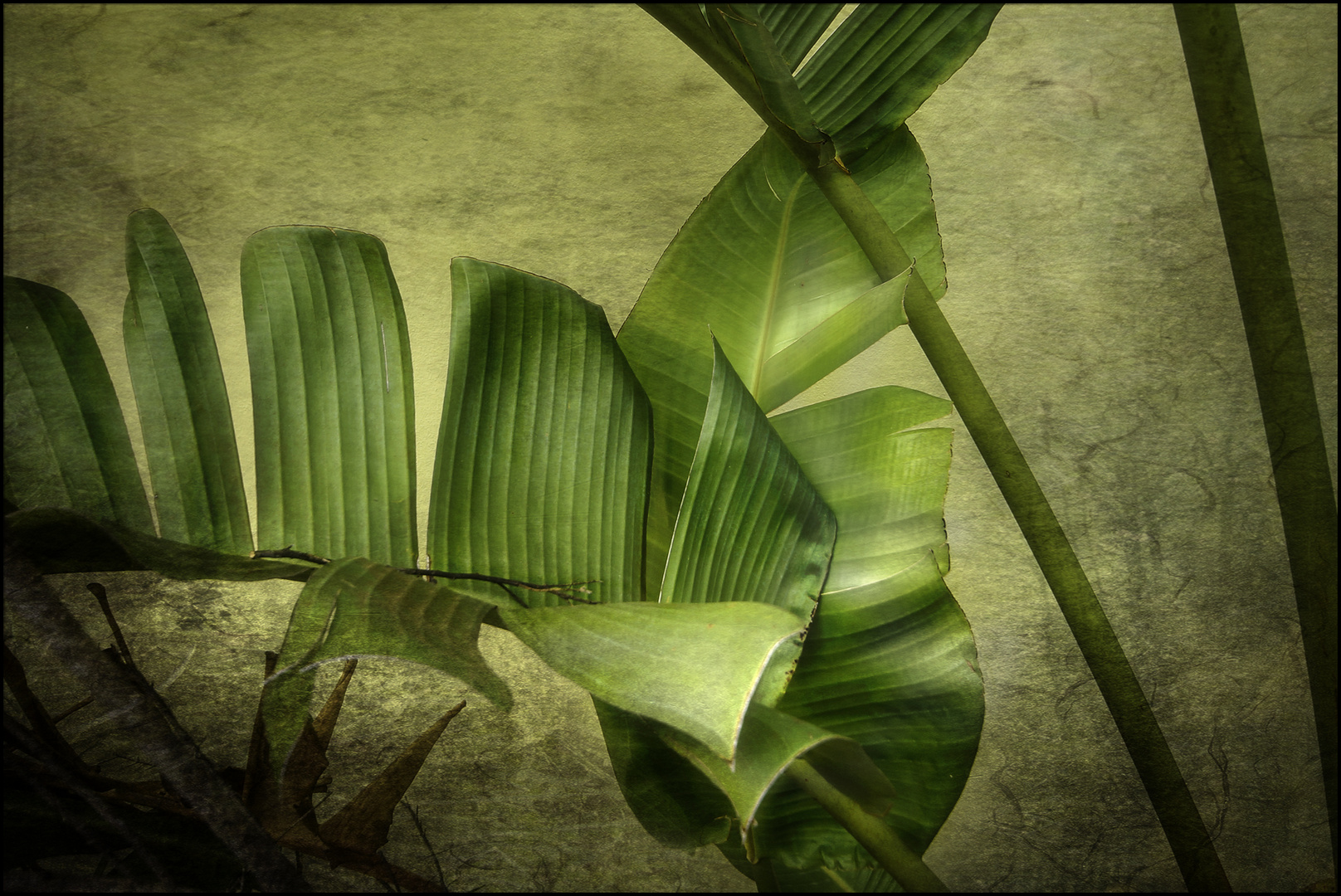 Palmenblatter Foto Bild Fotokunst Natur Kreativ