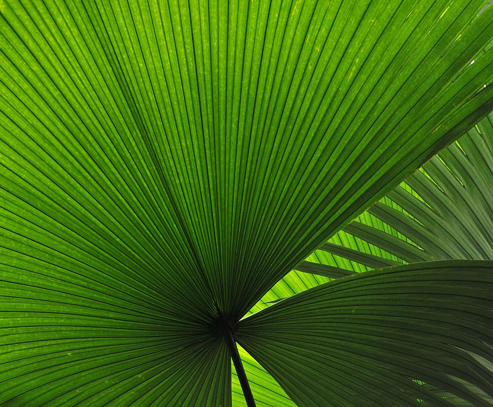 Palmenblätter – Grün 01
