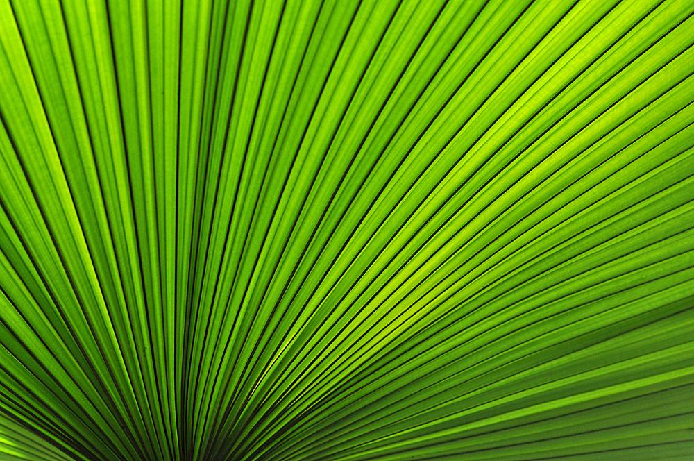 Palmenblätter – Grün 02