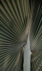 Palmenblatt 2