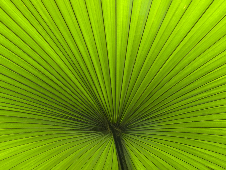 Palmenblatt