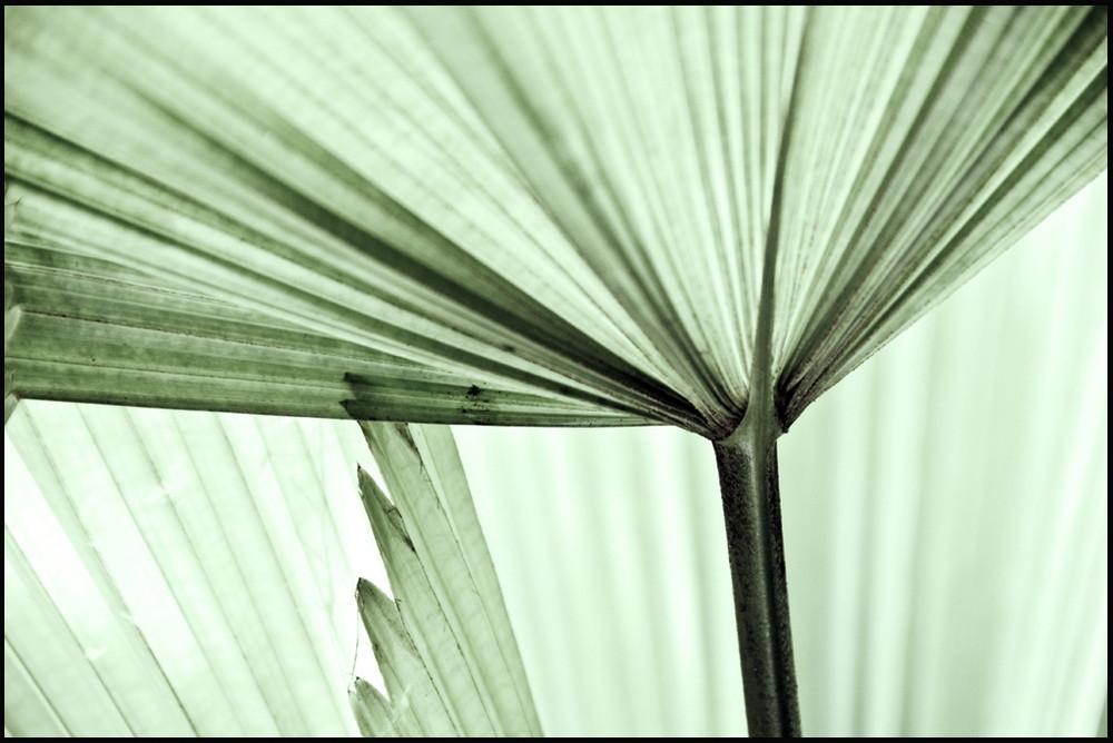 Palmenblatt-Variation I